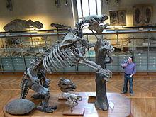 220px-Megatherium_americanum_complete