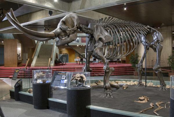 Conway Mastodon